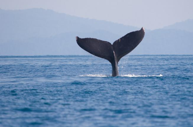 Collegamento a Conservation Medicine of Aquatic Animals