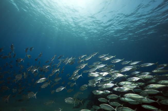 Collegamento a Tartarughe e delfini:interazione con le attività antropiche in alto adriatico